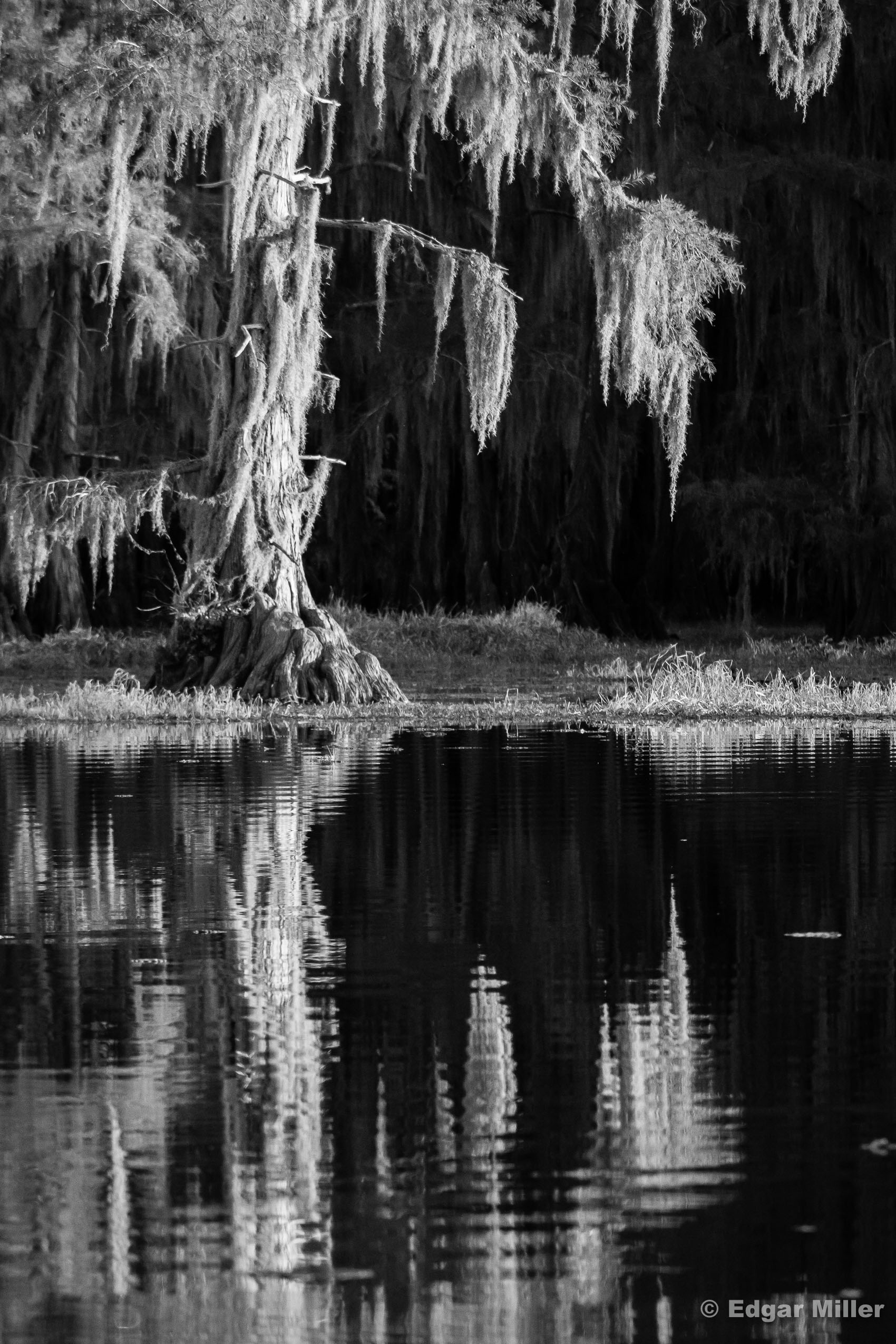 Caddo Lake Rorschach