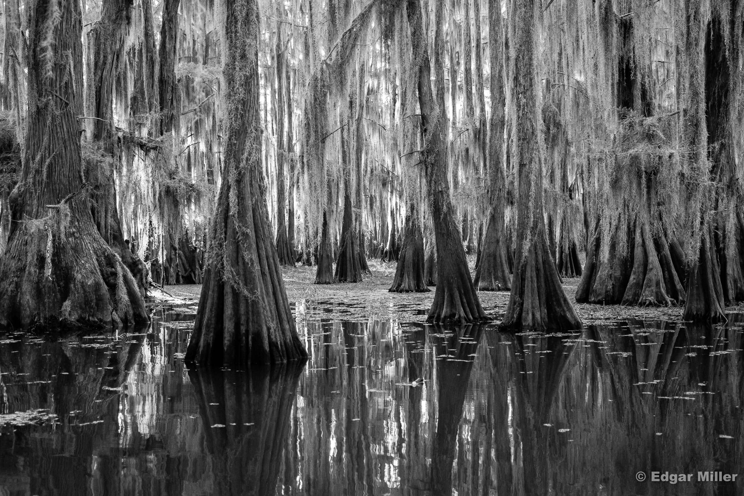 Caddo Lake Mystery